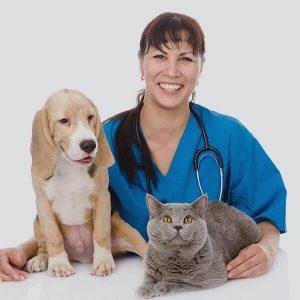 bayan veteriner hekim