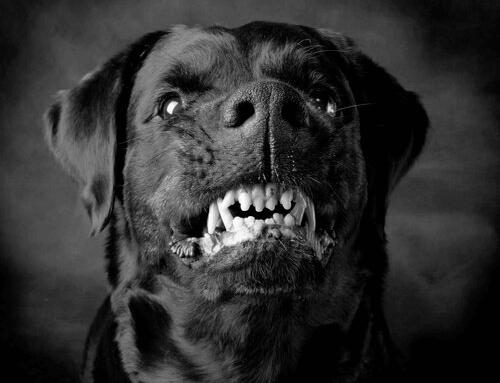 Köpeğim Normal Mi?
